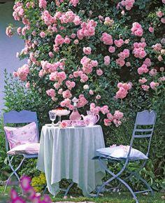 Pink climbing roses, Patio Roses, Rose 'New Dawn', or Rose 'Albertine', Rose… New Dawn Climbing Rose, Climbing Roses, Garden Trellis, Garden Plants, Sun Plants, Fruit Garden, House Plants, Garden Retreat Ideas, Vintage Garden Decor