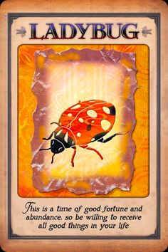 messages from your animal spirit guides | Angel Oracle Card, from the Messages From Your Animal Spirit Guides ...