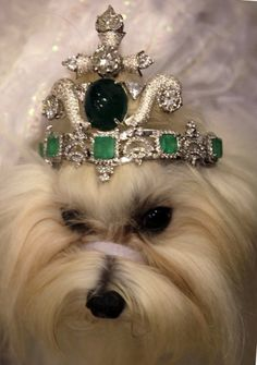 BILLIONAIRE'S POOCH ~ DOG TIARA WORTH $4.2 MILLION DOLLARS