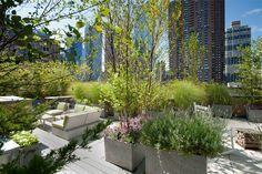 rooftop garden in NY!
