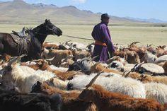 Voyage Vie Nomade en Mongolie - Le départ du 3 juillet 2015 est garanti avec le Festival de Naadam dans la Vallée de l'Orkhon ! http://www.absolu-voyages.com/voyages/mongolie/mongolie-voyage-vie-nomade-famille-enfants.html Plus d'infos : contactez Cécile au 04 37 02 2000.