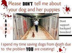 Save dogs, adopt...
