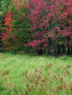 ✮ Autumn Pasture - Cleveland, Ohio