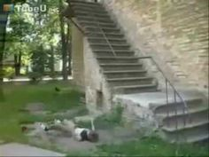 Parkour is fun to watch when it's done well (and there are some great videos on YouTube). But before I go and start jumping over fences and stairwells, this video reminds me of the other side of the sport.