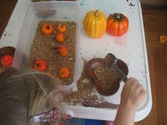 Fall work, grains and pumpkins    we can do all things blog