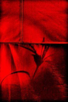 Silhouetas sob vermelho/Silhouettes behind red
