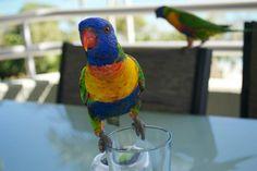 Hamilton Island #HamiltonIsland #Birds