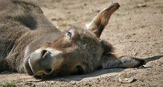 Tierische Gesetze Folge 60 | Kuriose Tierwelt