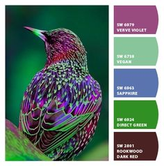 Colour scheme palette with 5 colour combination including violet, shades of green, blue and brown