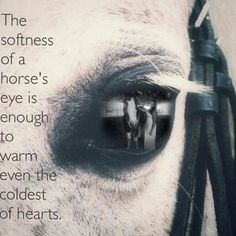 The softness of a horses eye.