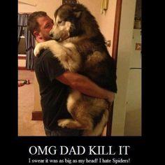 Big puppy,  so my husky
