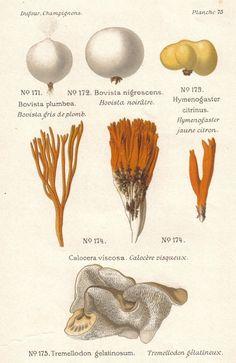 naturalist illustrations