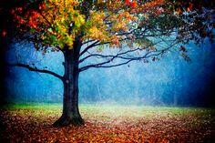 nature's generosity - colorful landscape - autumn tree - fog photography - fall foliage - decorative print on Etsy, $25.00