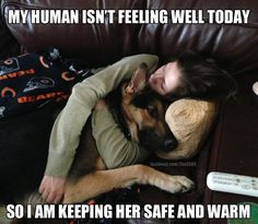 GSD's are so protective