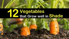 Don't let limited space stop you. Growing vegetables indoors can happen all year long. Learn how start and maintain your indoor vegetable garden. Growing Vegetables Indoors, Easy Vegetables To Grow, Growing Tomatoes In Containers, Planting Vegetables, Winter Vegetables, How To Plant Carrots, Companion Planting Guide, Gardens, Tomato Plants