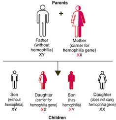 Hemophilia is a sex linked gene
