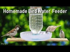 Bird Water Feeder: In today video you will learn how to make a simple and easy bottle bird water feeder for wild and pet birds. Make A Bird Feeder, Bird Feeder Craft, Bird House Feeder, Homemade Bird Feeders, Wild Bird Feeders, Hanging Bird Feeders, Plastic Bottle Crafts, Diy Bottle, Plastic Bottles