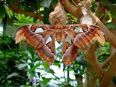 Merveilleux Butterfly Gardens Victoria BC Canada | Butterfly Gardens In Victoria  Island, BC, Canada