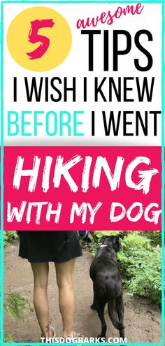 Hiking with dogs is an awesome bonding experience. Read these tips to find dog friendly hiking trails and prepare with the right dog hiking gear. Dog Hiking Gear, Hiking Trails, Baby Hiking, Kids Hiking, Training Your Dog, Brain Training, What Dogs, Dog Travel, Dog Care Tips