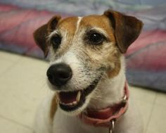 Happy Friday everyone, we're back with another #FurryFriend interview!  Meet Lucy, a 5 and 1/2 year old Wire Fox Terrier up for adoption at the Lowell Humane Society in #MA