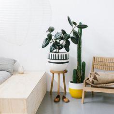 94-indoor-mali-dip-mustard.jpg (500×501)