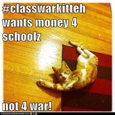 Cat Memes: The Class War Kitteh - Socialphy