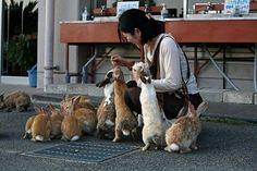 The Island of Rabbits, Okunoshima, Japan