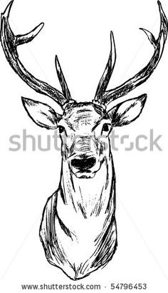 vector - Deer - hand draw , isolated on background by BORTEL Pavel - Pavelmidi, via ShutterStock