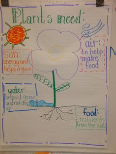 A graphic organizer to help students remember what a plant needs to stay alive!
