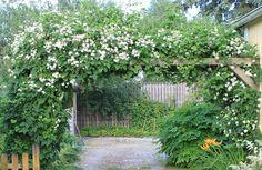 Toves trädgårdsdrömmar: