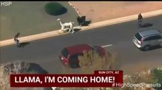 Arizona Police Chase Two Llama's Through Traffic (Teaser Trailer)
