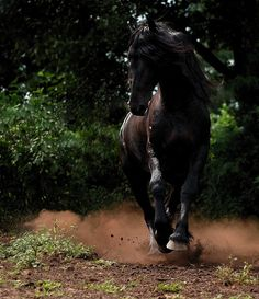 Friesian.. someday you will be mine :)