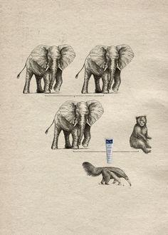 Lubricante Ky - Origen de las especies