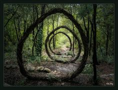 A Year in a French Forest. Sculpture No2 by Spencer Byles.(Photograph: Leo Fvy)