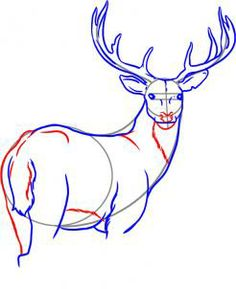 how to draw a white tailed deer step 5