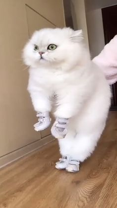 Funny Animal Jokes, Funny Cute Cats, Cute Baby Cats, Cute Little Animals, Funny Animal Videos, Cute Funny Animals, Kittens Cutest, Happy Birthday Funny Cats, Cute Puppy Names