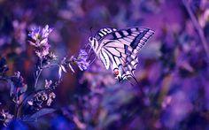 color violeta - Buscar con Google
