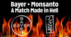 Monsanto has recently accepted Bayer AG's $66 billion takeover offer, which will make the new entity the largest seed and pesticide company in the world. http://articles.mercola.com/sites/articles/archive/2016/09/27/monsanto-bayer.aspx