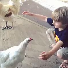 A joyful moment between a boy and his chicken: | 30 Animal Pictures That Will Make You A Better Person