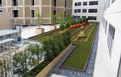 Green Roof at Sharp Memorial Hospital in San Diego, by Good Earth