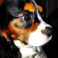 Henry the King Charles