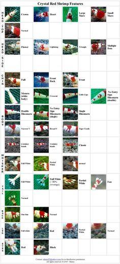 www.aquaculturesg.com articles beeshrimpsp bs_features.jpg