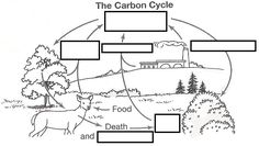 Carbon Cycle Diagram-Organisms in biological ecosystems