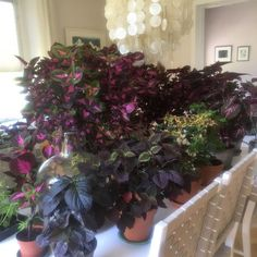 Growing Plants, Indoor Plants, Farmer, Rose, Flowers, Diy, Gardens, Photo Illustration, Inside Plants