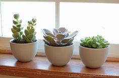 Indoor succulent garden - schattig planten. For the floating kitchen shelves.