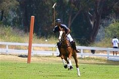 polo horse images - Bing Images