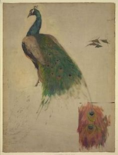 We who heart peacocks: Archive