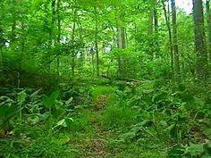 Amazon Rainforest Relaxation Video