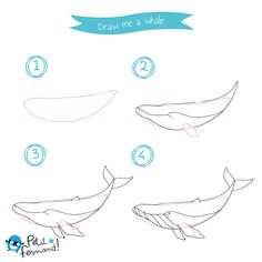 Draw-me some Dinosaurs - Kids' tutorials Whale Drawing, Sea Drawing, Dinosaur Drawing, Life Drawing, Drawing Tips, Drawing Sketches, Drawing Tutorials, Sea Animals Drawings, Amazing Animals