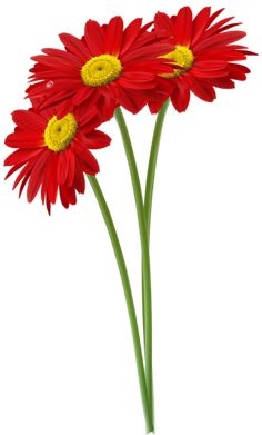 Beautiful Rose Flowers, Red Flowers, Gerbera, Garden Fence Art, Flower Drawing Tutorials, Photo Frame Design, Cartoon Flowers, Watercolor Projects, Sunflower Art